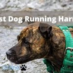 The 5 Best Dog Running Harnesses