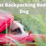 The Best Backpacking Bed for Your Dog