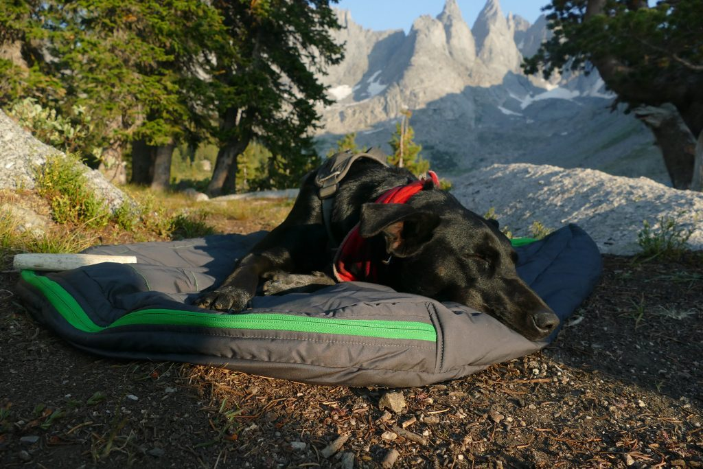 backpacking dog bed