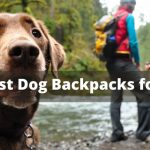 The 5 Best Dog Backpacks for Hiking