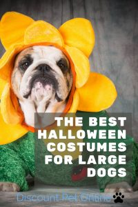 The Best Halloween Costumes for Large Dogs