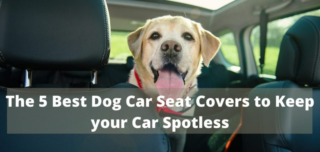 The 5 Best Dog Car Seat Cover to Keep your Car Spotless