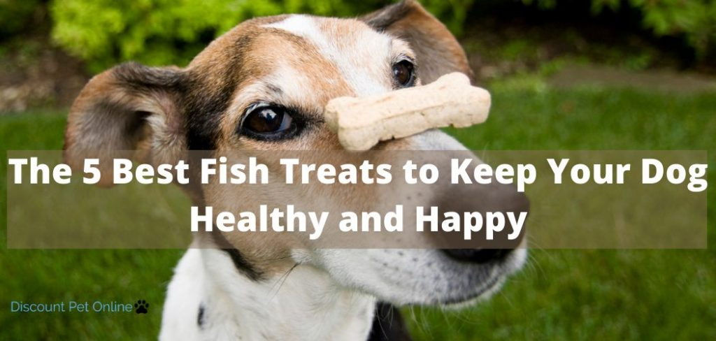 The 5 Best Fish Treats to Keep Your Dog