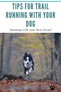 Tips for Trail Running with your Dog