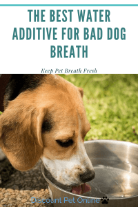 The Best Water Additive for Bad Dog Breath