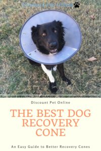 The Best Dog Recovery Cone - A Helpful Guide to Help Your Dog with a Softer and Better Recovery Cone