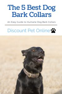 the 5 Best Bark Collars for Dogs