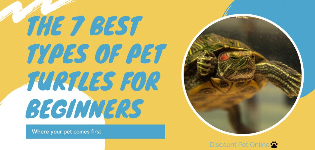 The 7 Best Types of Pet Turtles for Beginners