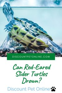 Can Red-eared Slider Turtles Drown - A Helpful Guide