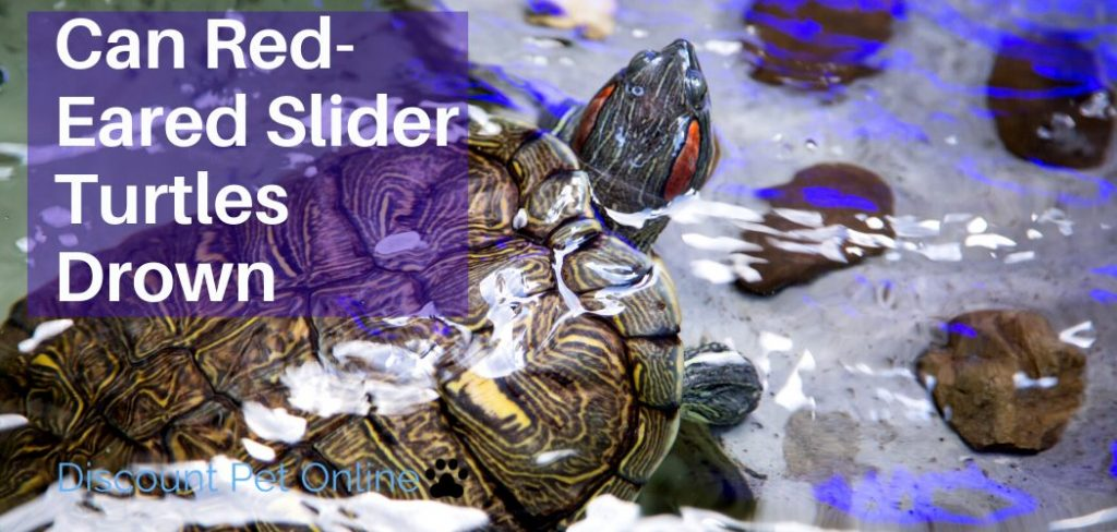 Can Red-eared Slider Turtles Drown