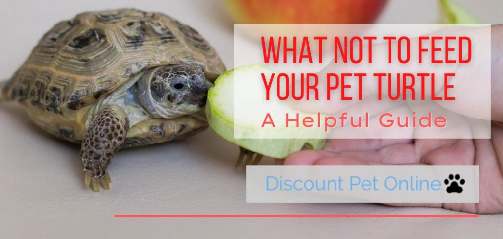 What Not to Feed Your Pet Turtle