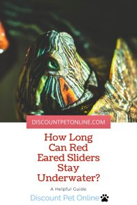 How Long Can Red Eared Sliders Stay Underwater