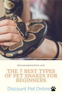 The 7 Best Types of Pet Snakes for Beginners