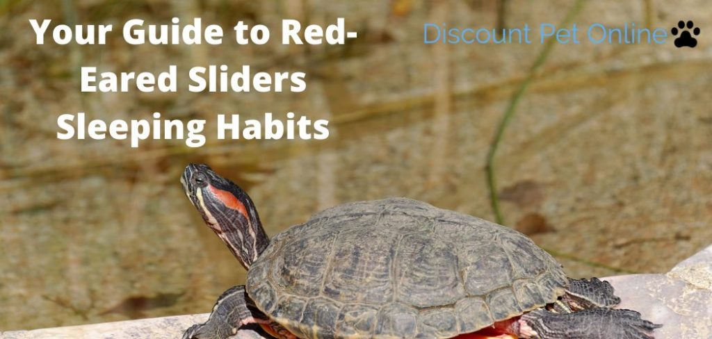 Your Guide to Red-Eared Sliders Sleeping Habits