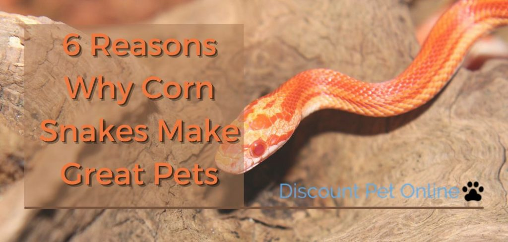 6 Reasons Corn Snakes are Great Pets