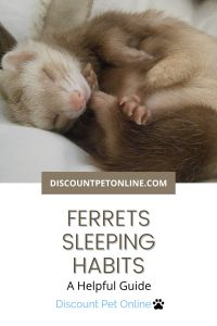 A guide to Ferret Sleeping Habits