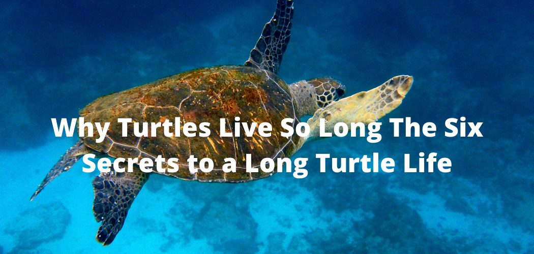 Why Turtles Live So Long The Six Secrets to a Long Turtle Life
