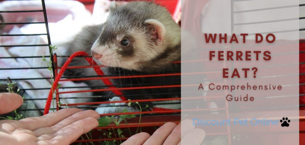 A Comprehensive Guide to Feeding Your Ferret