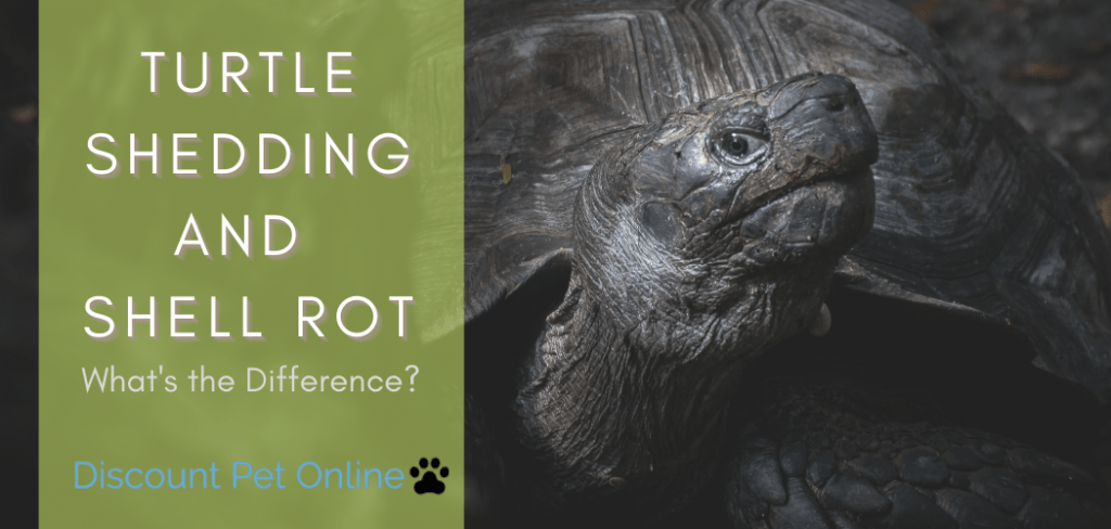 Turtle shedding and shell rot
